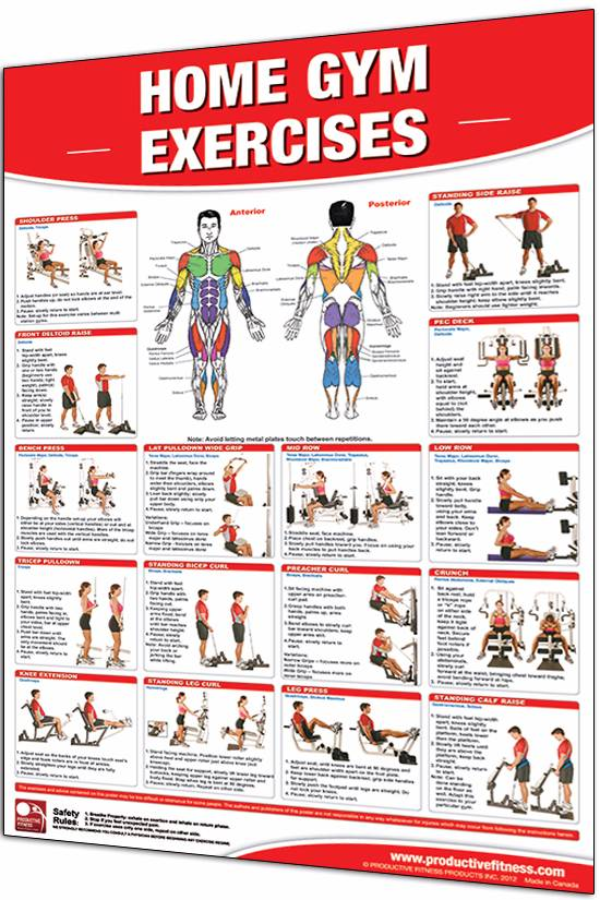 Home Gym Exercises Poster | Great Life Fitness Store